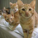 Pourquoi avoir beaucoup de chats chez soi n'est pas une bonne idée