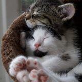 Journée internationale du câlin : ces chiens et ces chats qui s'aiment vont totalement vous faire craquer !