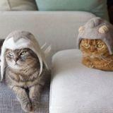 Ces chats portent des chapeaux fabriqués avec leurs chutes de poils et le résultat est juste génial !