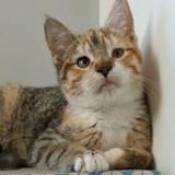 Ils sauvent deux chats des rues, une fois chez le vétérinaire ils apprennent la terrible vérité