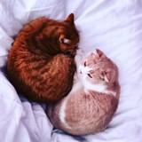 Les chats du chanteur Ed Sheeran ont leur propre compte Instagram !
