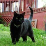 Près de Nice, 24 chats et chiens seraient morts empoisonnés