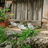 Fukushima : 10 ans après la catastrophe nucléaire, un homme s'occupe de 41 chats abandonnés