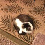 Il rend visite à sa mamie qui s'occupe de chats errants et lui montre que l'un d'eux n'est pas un chat