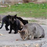 Covid-19 : le Collectif Chats 100% Stérilisation lance une pétition pour aider les animaux errants