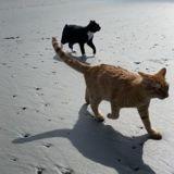 Ils emmènent leur chat à la plage pour la première fois : sa réaction les fait éclater de rire !