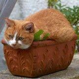 10 chats qui se prennent pour des plantes vertes ! (Photos)