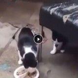 Ils étaient prêts à tout pour sauver des chats coincés dans une maison condamnée (Vidéo)