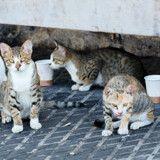 Aude : les 200 chats retrouvés morts victimes d'un virus ?