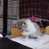 Parmi ces deux chats, celui qui fait la loi n'est pas forcément celui auquel vous vous attendiez (Vidéo du jour)