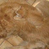Ces 15 chats sont bien cachés... saurez-vous les trouver ?
