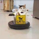 Aidé d'un aspirateur ce chat révolutionne l'art du déplacement (Vidéo du jour)