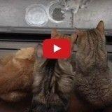 Captivés par un chaton errant, ces 10 chats l'observent… et l'adoptent !