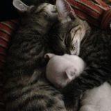 Des chats héroïques ont adopté un adorable chiot à 3 pattes que sa génitrice essayait de dévorer