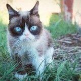 10 records incroyables détenus par des chats