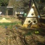 En Turquie, les chats errants ont maintenant leur propre village !