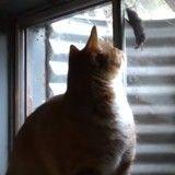 Quand une petite musaraigne joue à chat (Vidéo du jour)