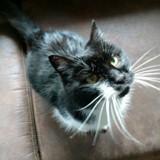Après 17 années de négligence, ce chat a trouvé la bonne personne