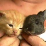 Un chat adopte un lapin orphelin (Vidéo du jour)