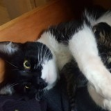 Il trouve une chatte qui vient d'avoir ses petits sous son lit, sa réaction fait rire tout Internet