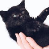Le chaton arrive aux urgences le corps brûlé : 8 semaines plus tard, les médecins n'en croient pas leurs yeux