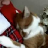 Chaque fois qu'il pense que son humaine va partir, ce chat fait la plus adorable des choses (Vidéo)