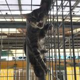 Pendant 1 an, cette chatte a refusé d'être caressée puis un miracle s'est produit