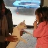 Atteinte d'un cancer et aveugle, une fillette de 4 ans retrouve son chat perdu