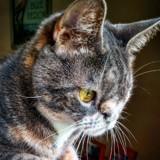 Elle trouve un chaton abandonné, ce que lui dit le vétérinaire la laisse sans voix