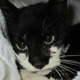 Ils recueillent une chatte en très mauvais état, un mois après ils ont le choc de leur vie