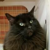 Elle arrive au refuge pour voir des chats et fait une demande qui bouleverse tous les volontaires
