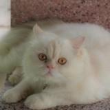 « Du jamais vu ! » : le vétérinaire aide une chatte à mettre bas et est stupéfait par ce qu'il voit
