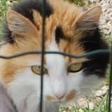 Cette chatte a été rasée en urgence : sa « métamorphose » la transforme en un tout autre animal !