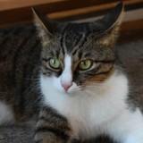 Les chroniques de Maître Terrin : justice pour Rosa, la chatte massacrée dans une cave