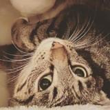 Ils laissent entrer une chatte errante chez eux : 1 heure après, ce qu'ils découvrent sous leur table est un choc