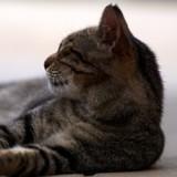 Par une nuit pluvieuse, ils abandonnent un chat dans une boite scotchée : son histoire n'était pas terminée
