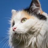 Le chat décide d'aider son humain à nettoyer la chaudière et le regrette aussitôt !