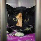 Elle emmène son chat chez le vétérinaire et fait une demande qui laisse tout le monde sans voix