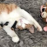 Elle trouve son chat tout mouillé : en visionnant la caméra de surveillance, elle se met à rire aux éclats