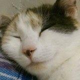 Une chatte errante offre 5 adorables petits cadeaux à la famille qui l'a recueillie