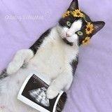 Mères, ces chattes célèbrent la vie… en photos !