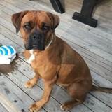 Elle reçoit un colis pour son chien, va à la Poste et ne s'attendait pas du tout à ce qu'on lui a dit (Vidéo)