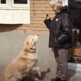 Elle voit son chien partir avec sa laisse dans la gueule : la raison est bouleversante (Vidéo)