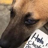 Un chien erre sur un marché : ce qui est écrit sur la pancarte autour de son cou est un électrochoc !