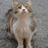 Le meurtrier du chat Chevelu enfin arrêté !
