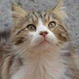 Rassemblements à Paris et Draguignan pour Chevelu, le chat martyr
