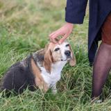 Procès du 13 novembre : les animaux d'une ferme-refuge au service des victimes