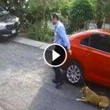 Il abandonne son chien en pleine rue… filmé par une caméra de vidéosurveillance