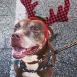 Elle adopte un chien âgé dans un refuge et décide de l'abandonner 2 jours après dans le froid !