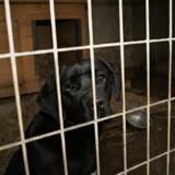 Ce chien vient de se faire abandonner, sa réaction est bouleversante (Vidéo)